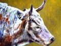 Heritage cow