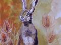 teasel hare small.JPG