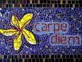 carpe diem - small.jpg