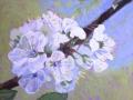 Plum blossom small.JPG